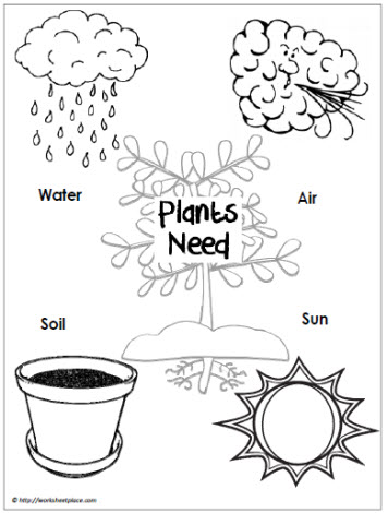 Plant-Needs-Poster