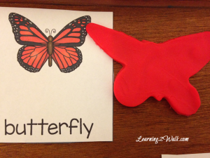 butterfly-life-cycle-1-300x225